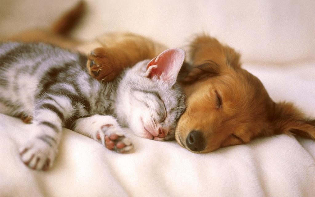 Pet Care @ Grosvenor Community Room (GCR) | London | Ontario | Canada